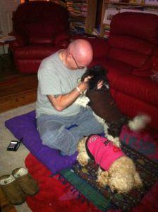 Daisy kiss meditation cavoodle