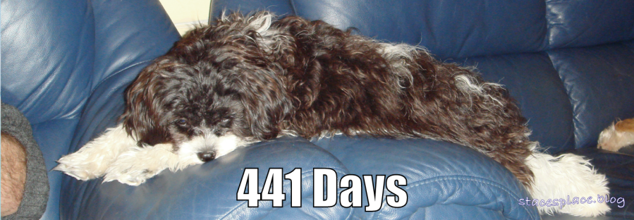 441 days for Daisy